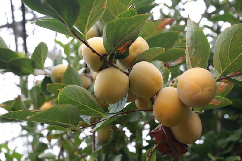 В Карагандинской области собран крупнейший урожай картофеля, фото-4