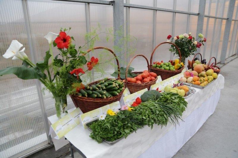 В Карагандинской области собран крупнейший урожай картофеля, фото-6