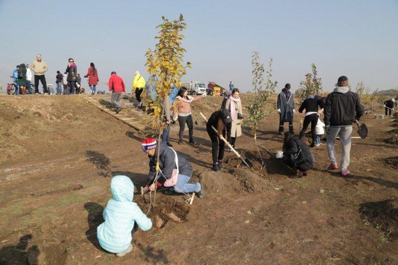 Более 6 тысяч деревьев высадили в Карагандинской области, фото-5