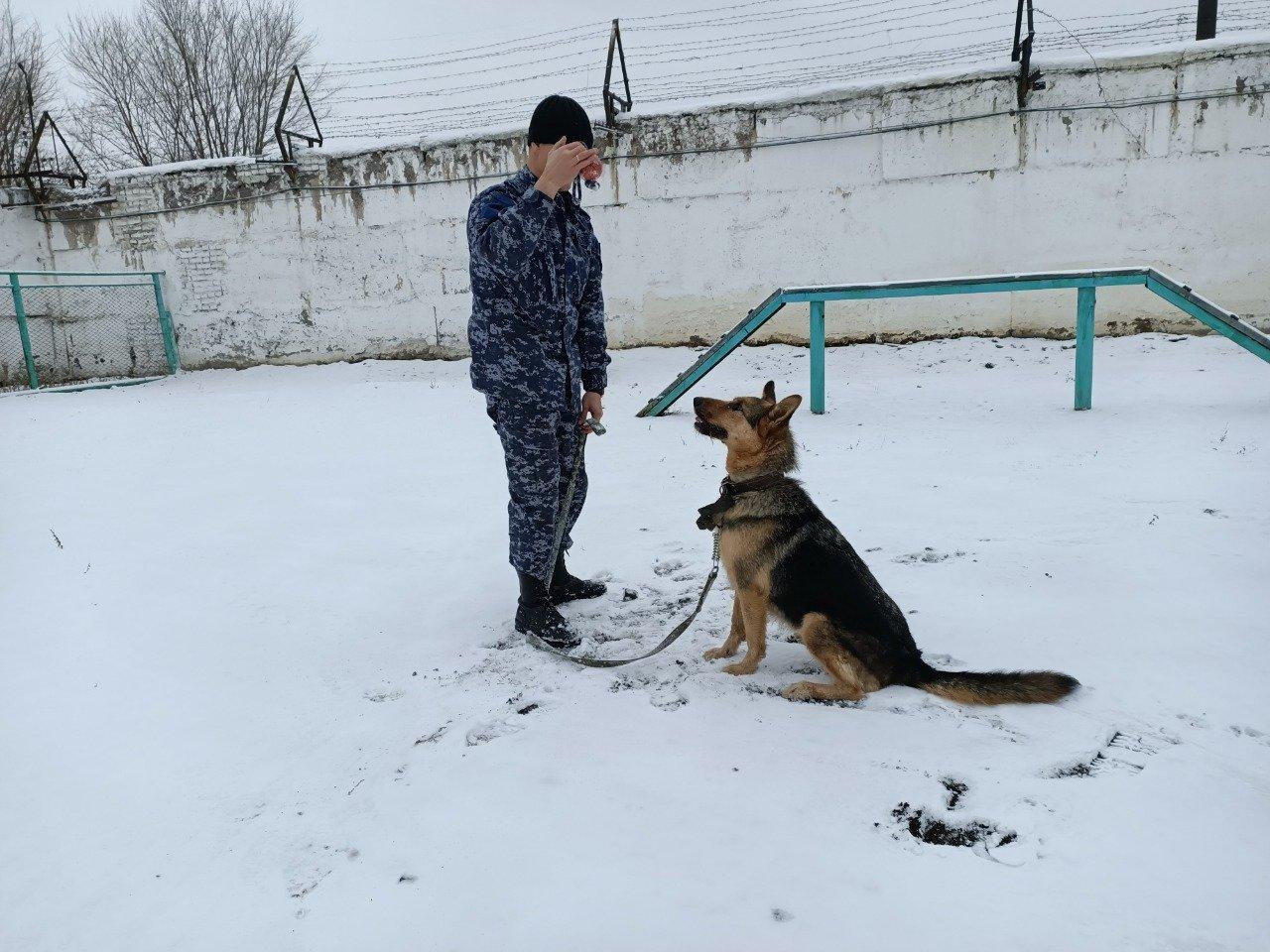 Уличный пес поступил на службу в полицию Карагандинской области, фото-1