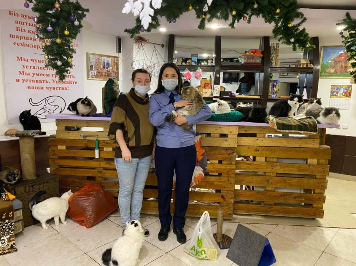 когтеточки и лежанки украсили котокафе, ДУИС Карагандинской области